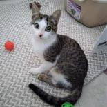 Lucky-Available from Foster