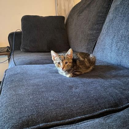 Carrot - Available from Foster!