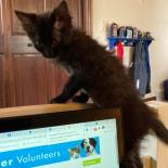 Soot - Available from Foster!