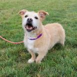 Marla - Available from Foster!