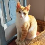 Robby - Available from Foster!