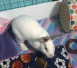 Cotton - Available from Foster!