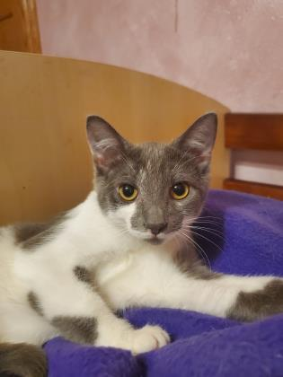 Cayenne - Available from Foster!