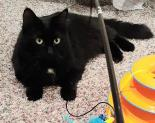 Binx - Available from Foster