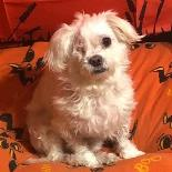 Fluffy - Available from foster!