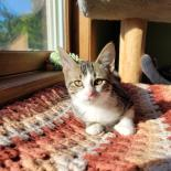 Endora - Available from Foster