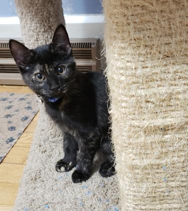 Cogsworth - Available in Foster!