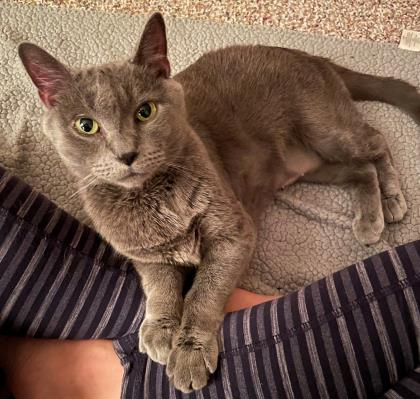 Stormy - Available from Foster!