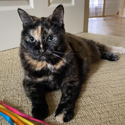 Snickers - Available from Foster!