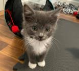 Nalani (Corn Bread) - Available from Foster!