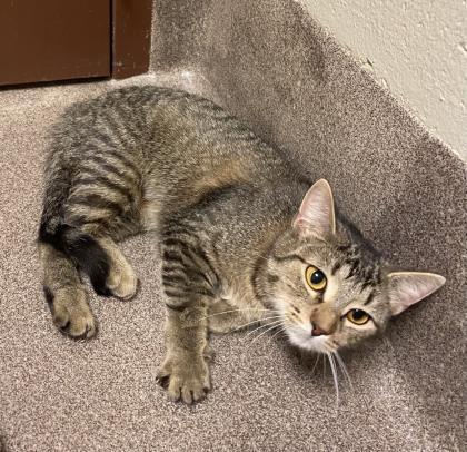 Kitty Cat-FFA