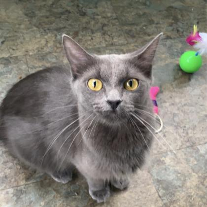 Arrietty - Available from Foster!