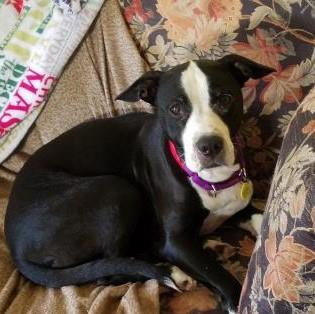 Diamond - Available from Foster!