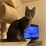 Orca - Available from Foster