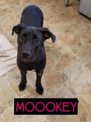 Moookey
