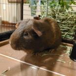 Biak-Available from Foster!