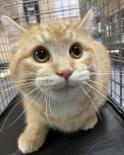 Oso-Working Cat Adoption!