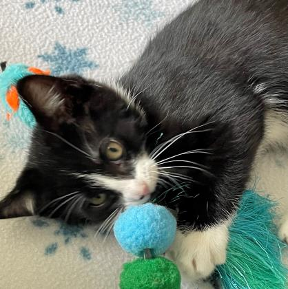 Socks - Available from Foster!