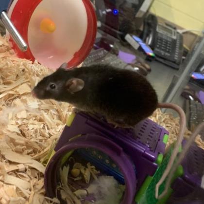 Tito Mouse