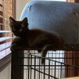 Charcoal - Available from Foster!