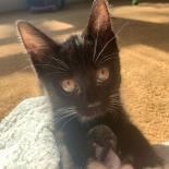 Togo-Available from Foster