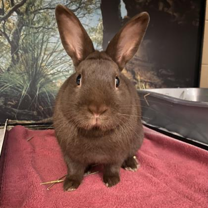 Thumper - Available from Foster!