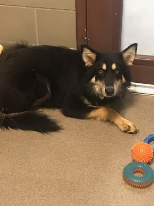 Bear - Available from Foster!