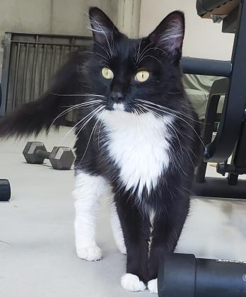 Mittens - Available from Foster!
