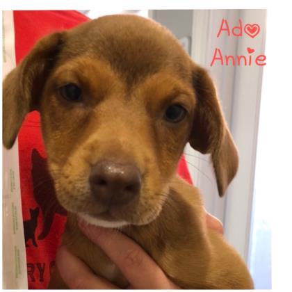 Ado Annie