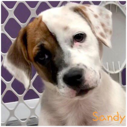 Sandy Hound
