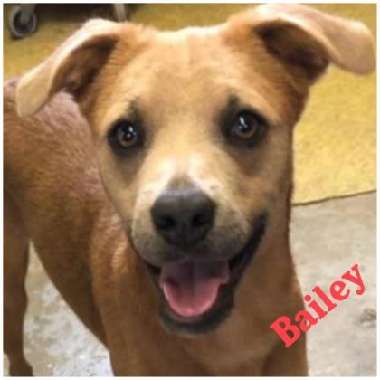 Bailey Harlan