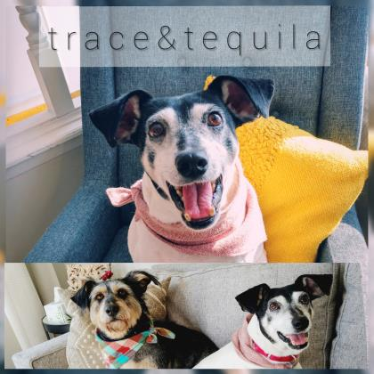 Trace (bonded to Tequila)