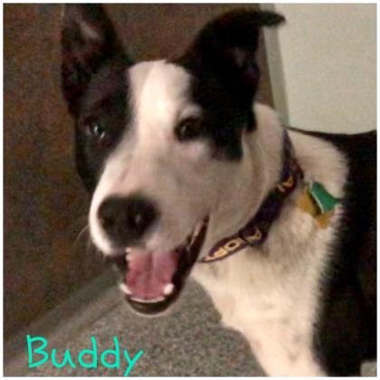 Buddy Border