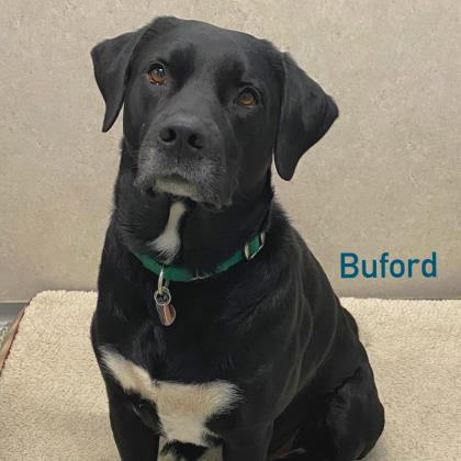 Buford Bonded to Moses