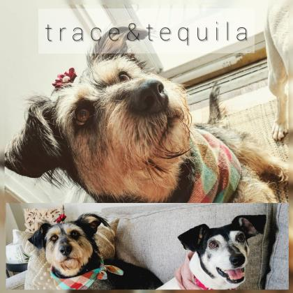 Tequila (bonded to Trace)