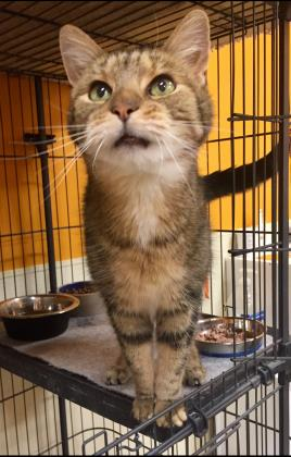 AHeinz57 Pet Rescue and Transport - Central Iowa Rescue