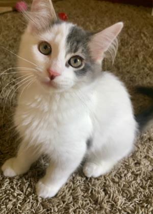 Ozzie Cat