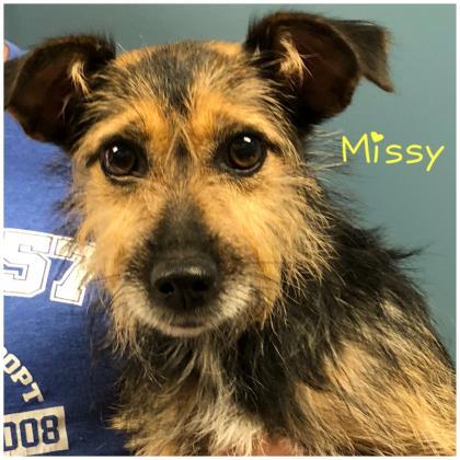 Missy Terrier