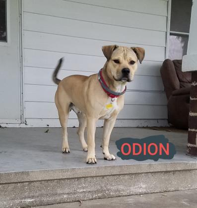 Odion