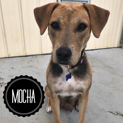 Mocha (Bonded to Slither)
