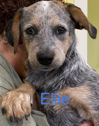 Ellie Inola