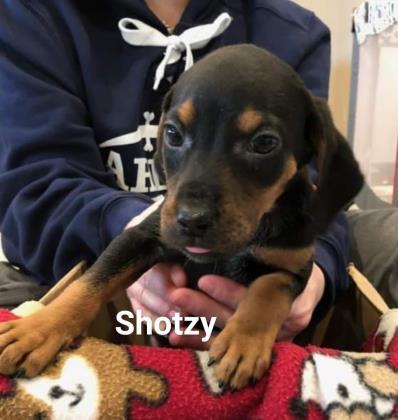 Shotzey