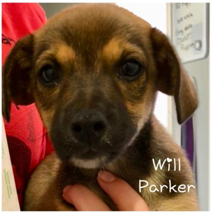 Will Parker