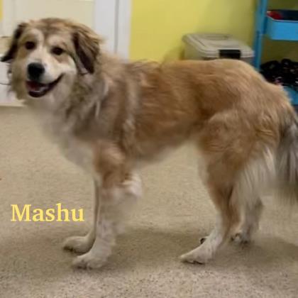 Mashu