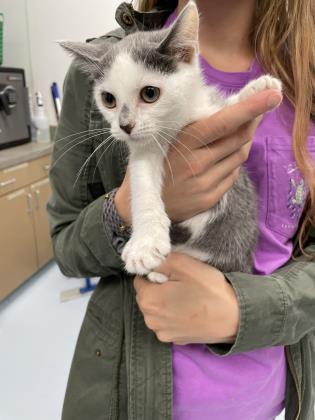 Meow Meow Fuzzy Face2