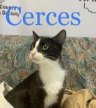 Photo of Cerces