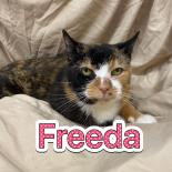 Photo of Freeda