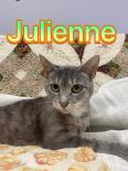 Photo of Julienne