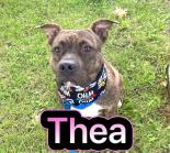 Photo of Thea