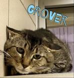 Photo of Grover